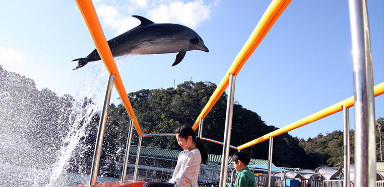 どこよりもおトクな藤田観光リゾート施設のご案内!どこよりもイルカに近い場所 下田海中水族館